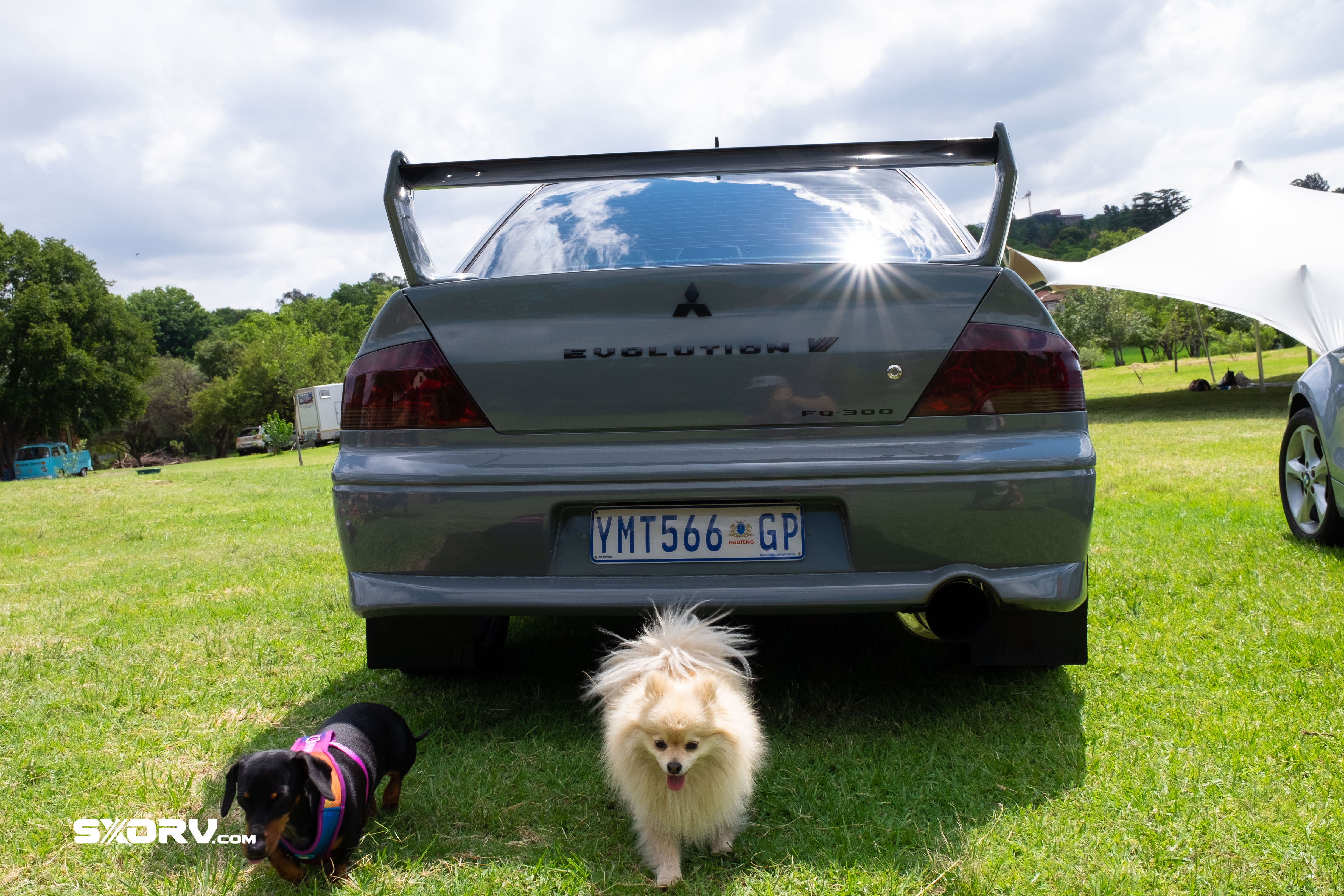 news,event,events,cayman,porsche,mazda rx8,350z,nissan,park off,rescue,animal,woodrock,puppies in the park,south africa,volkswagen club,vwcsa,Automotive,Cars,